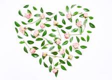 Menchia kwiaty, zieleń opuszczają w formie serca Fotografia Royalty Free
