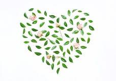 Menchia kwiaty, zieleń opuszczają w formie serca Obraz Royalty Free