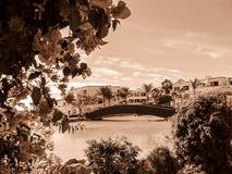 Menchia kwitnie blisko błękitnego basenu sepiowego Zdjęcia Royalty Free