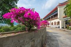 Menchia kwitnie w betonowym flowerpot Zdjęcia Stock