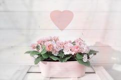Menchia kwitnie w flowerpot z zamazanym kierowym symbolem obrazy stock