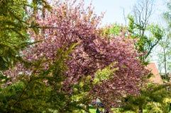Menchia liście na drzewie i kwiaty zdjęcie stock
