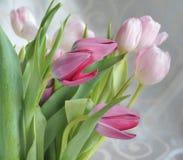 Menchia tulipany Zdjęcie Stock