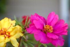 Menchie & Żółty kwiat Zdjęcia Stock