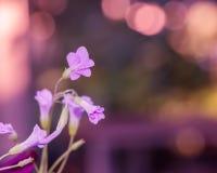 Menchie i purpurowi kwiaty - Akcyjny wizerunek Zdjęcie Royalty Free