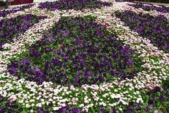 Menchie i purpury Obrazy Royalty Free
