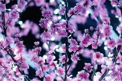 Menchie kwitnęli świecznika z małymi światłami białymi Zdjęcia Stock