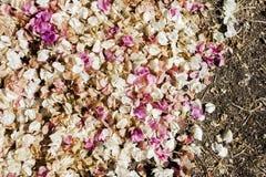Menchii i Białych Spadać kwiaty na ziemi, Abstrakcjonistyczny tło Obraz Royalty Free