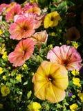 Menchii i kolor żółty kwiaty Fotografia Stock