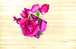 Menchii róża w pudełku na drewnianym tle Zdjęcie Stock