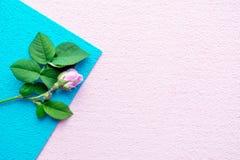 Menchii róża z zielenią opuszcza na błękita i menchii asymmetrical geom Obrazy Royalty Free