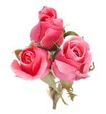 Menchii róży głowa Obrazy Royalty Free
