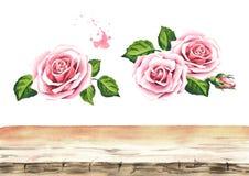 Menchii róży kwiatu tła elementy Projektuje elementy dla kart, zaproszeń i tkaniny, Akwareli ręka rysująca ilustracja, iso royalty ilustracja