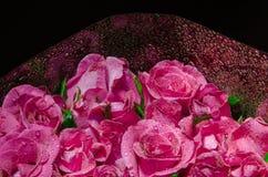 Menchii róży okwitnięcie Obraz Royalty Free