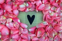 Menchii róży płatki pracowniani obraz royalty free