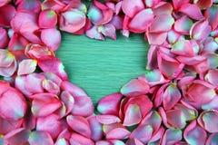 Menchii róży płatki pracowniani obrazy stock
