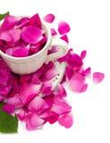 Menchii róży płatki w pięknej herbacianej filiżance obrazy stock