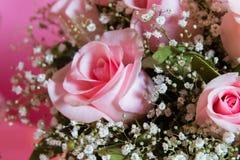 Menchii róży menchii tło Walentynka dnia tło Cukierku bar Fotografia Royalty Free