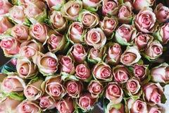 Menchii róży tło, zakończenie wiele pastelowe barwione róże Zdjęcie Royalty Free