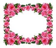 Menchii róży kwiatów rama Zdjęcie Royalty Free