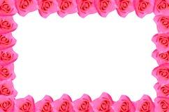 Menchii róży kwitnienie Zdjęcie Stock