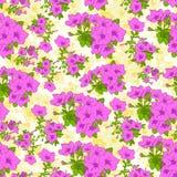 Menchii róży kwiatu rośliny wzoru bezszwowy wektor Fotografia Stock