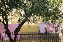 Menchii ubrania w ogródzie Fotografia Royalty Free