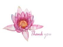 Menchii waterlily akwareli ilustracyjny ewidencyjny graficzny wektor Obrazy Royalty Free
