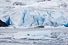 mendenhall ледника Стоковые Фото