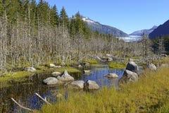 Mendenhall glaciär nära Juneau, Alaska arkivbilder