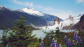 Mendenhall Glacier, Juneau, Alaska. Mendenhall Glacier in Juneau Alaska. Summertime royalty free stock image
