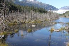 Mendenhall glacier; Juneau, Alaska Royalty Free Stock Photo