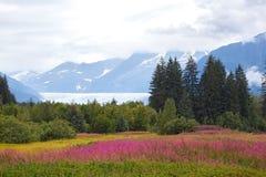 Mendenhall Gletscher Stockbilder