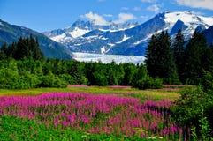 Mendenhall-Gletscheransicht mit Fireweed Lizenzfreie Stockbilder