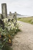 Mendocino Καλιφόρνια Στοκ εικόνα με δικαίωμα ελεύθερης χρήσης