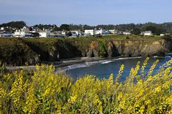 Mendocino California. Town of Mendocino California with yellow flowers in foreground Stock Photos