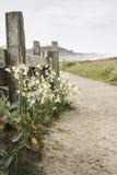 Mendocino California. A walking path in Mendocino California Royalty Free Stock Image