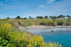 Mendocino Headlands wiosny kwiaty fotografia stock