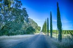 Mendocino See nuture Lizenzfreies Stockfoto