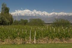 Mendoza royalty free stock image