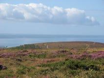 Menez-Hom och hed i Brittany royaltyfria bilder