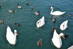 Menge der acquatic Vögel Lizenzfreies Stockfoto