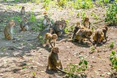Menge der Affemakakenfamilie in einem Dschungel Lizenzfreie Stockfotos