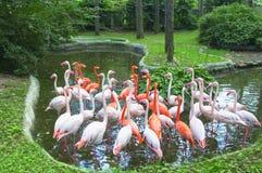 Menge der Flamingos stockbild