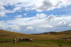 Menge der Pferde lizenzfreie stockfotografie
