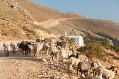 Menge der Schafe, welche die Straße blocken. Stockbild