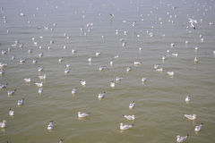 Menge der Seemöwe schwimmend auf das SeewarteLebensmittel von den Menschen Stockfotografie