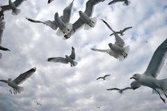 Menge der Seemöwen in der Ostsee Lizenzfreie Stockfotografie