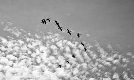 Menge der Vögel Stockbild