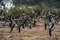 Menge der Vögel in Afrika stockbilder